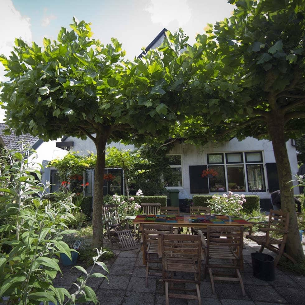 tuin renovatie / Groot onderhoud