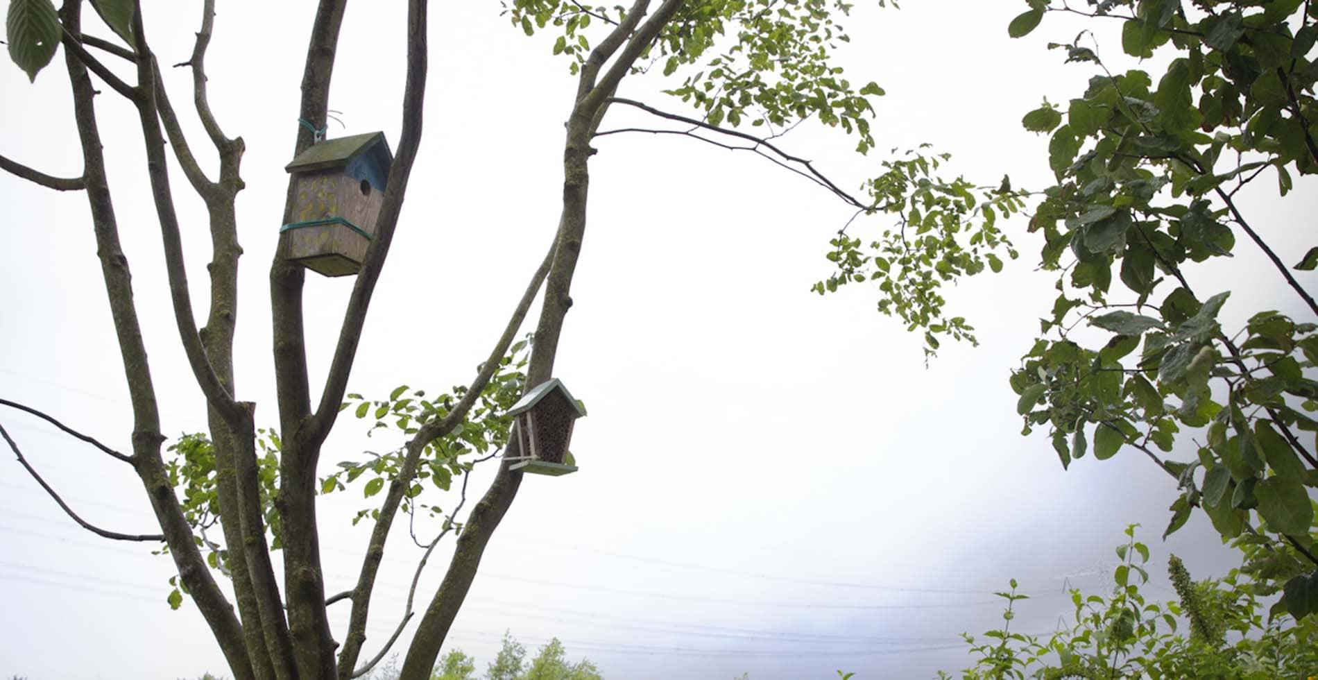 Tuinaanleg voor Strootman landschapsarchtecten